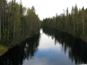 Karelische Moorlandschaft